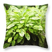 Sage Plant Throw Pillow by Elena Elisseeva