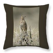 Sage Thrasher Throw Pillow