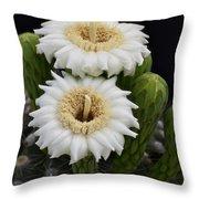 Saguaro Blooms II Throw Pillow