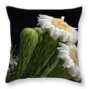 Saguaro Blooms  Throw Pillow