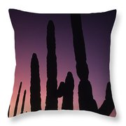 Saguaro Cactus Are Silhouetted By An Throw Pillow