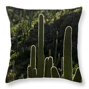 Saguaro Cactus Backlit Throw Pillow