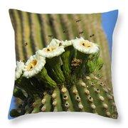 Saguaro Cactus Flower 8 Throw Pillow