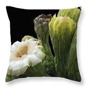 Saguaro Cactus Flower Throw Pillow