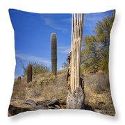 Saguaro Cactus Skeleton Throw Pillow