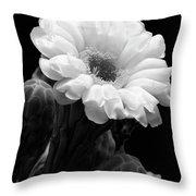 Saguaro First Bloom Throw Pillow