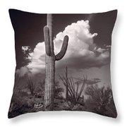 Saguaro Sunset Arizona Bw Throw Pillow