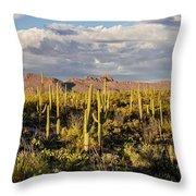 Saguaronatlparkeveninglight Throw Pillow