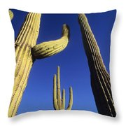Saguaros Dwaft One Another Throw Pillow