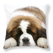 Saint Bernard Puppy Sleeping Throw Pillow