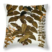 Saint-johns-wort, 1613 Throw Pillow