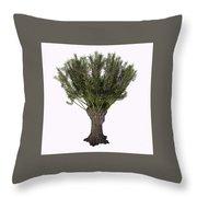 Salix Viminalis Tree Throw Pillow