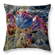 Sally Lightfoot Crab 1 Throw Pillow