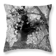 Salmon River Autumn Throw Pillow