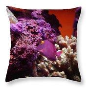 Salt Water  Aquarium Throw Pillow