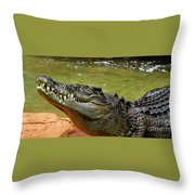 Saltwater Crocodile By Kaye Menner Throw Pillow