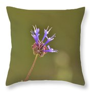 Salvia Clevelandii II Throw Pillow