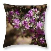 Salvia Dorrii Throw Pillow