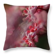 Sambucus Nigra 2 Throw Pillow