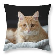 Samson_speaks Kitten Years Throw Pillow