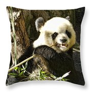 San Diego Panda Throw Pillow