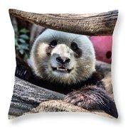 San Diego Zoo California Giant Panda Throw Pillow