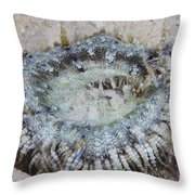 Sand Anemone, Bonaire, Caribbean Throw Pillow by Terry Moore