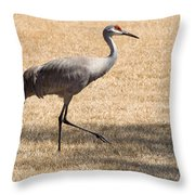 Sand Hill Cranes Throw Pillow