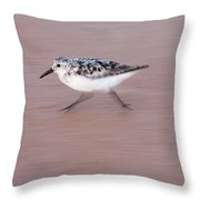 Sanderling On The Run Throw Pillow