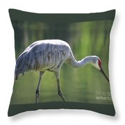Sandhill And Green Pond Throw Pillow