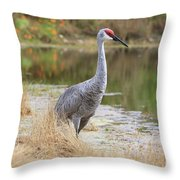 Sandhill Beauty By The Pond Throw Pillow