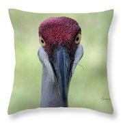 Sandhill Crane 4 Throw Pillow