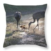 Sandhill Crane Family In Morning Sunshine Throw Pillow by Carol Groenen