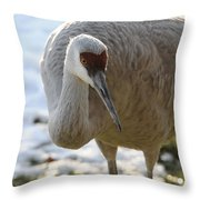 Sandhill Crane In Winter Throw Pillow
