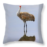 Sandhill Crane Posing Throw Pillow