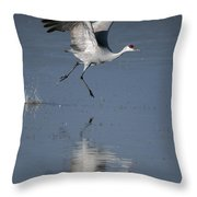 Sandhill Crane Running On Water Throw Pillow