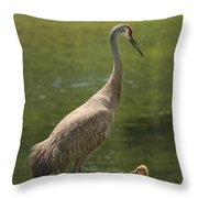 Sandhill Crane With Baby Chick Throw Pillow