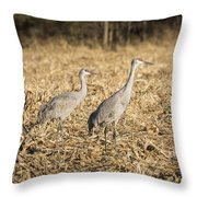 Sandhill Cranes  2015-2 Throw Pillow