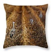 Sandhill Cranes - Cornfield Throw Pillow