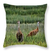 Sandhill Cranes II Throw Pillow