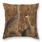 Sandhill Cranes On Watch Throw Pillow