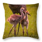 Sandhill Cranes Playing Throw Pillow