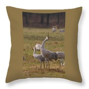 Sandhill Delight Throw Pillow