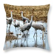 Sandhill Gang Throw Pillow