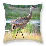 Sandhill In The Sunshine Throw Pillow by Carol Groenen