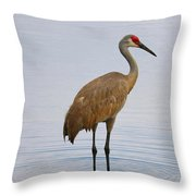 Sandhill Standing In Peaceful Pond Throw Pillow
