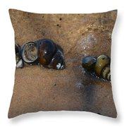 Sandy Shells Throw Pillow