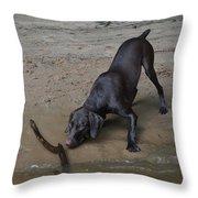 Sandy Shore Throw Pillow