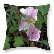 Sanford Spring Throw Pillow