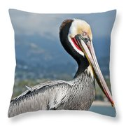 Santa Barbara Brown Pelican Throw Pillow